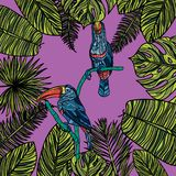 Tropiskt kort för sommar med tropiskt Arkivbild