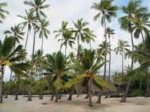 Tropiskt landskap royaltyfri bild