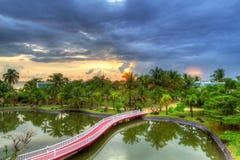 Tropiskt landskap av palmträd på solnedgången Arkivbilder