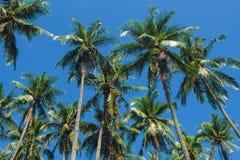 Tropiskt landskap för Cocopalmträd Gömma i handflatan det vibrerande tonade fotoet för skyscape Arkivfoton