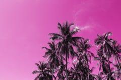 Tropiskt landskap för Cocopalmträd Gömma i handflatan tonade fotoet för skyscape det rosa färger Arkivfoton