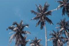Tropiskt landskap för Cocopalmträd Gömma i handflatan tonade fotoet för skyscape det tappning Arkivbild