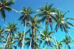 Tropiskt landskap för Cocopalmträd Gömma i handflatan tonade fotoet för skyscape det turkos Arkivfoton