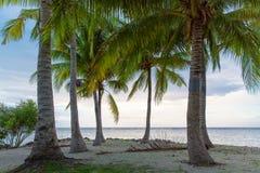 Tropiskt landskap för hav med palmträd i molnigt väder på solnedgången arkivfoton