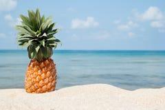 Tropiskt landskap för sommar med ananas på den vita sandstranden på bakgrunden av det blå havet och himmel arkivbilder