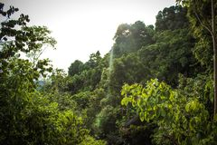 Tropiskt landskap i Koh Samui Thailand Fotografering för Bildbyråer