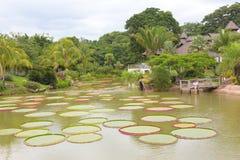 Tropiskt landskap med dammet och träd Arkivbilder