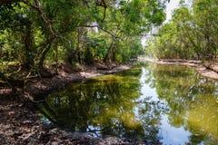 Tropiskt landskap med en behållare Fotografering för Bildbyråer