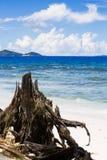 Tropiskt landskap med havstranden, wood stam Arkivfoto