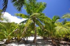Tropiskt landskap med palmträd Arkivfoto
