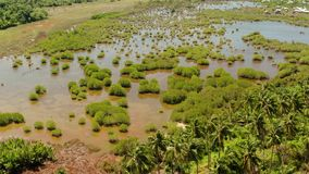 Tropiskt landskap med palmtr?d i Filippinerna arkivfilmer