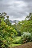 Tropiskt landskap på den Arenal Monoa semesterorten arkivfoton