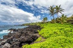 Tropiskt landskap på Maui arkivbild