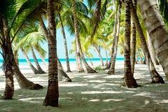 Tropiskt landskap, palmträd, rainforest royaltyfri foto