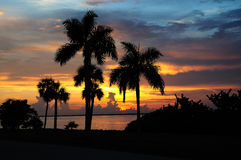 tropiskt livligt för horisontalsolnedgång Royaltyfria Bilder