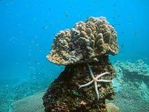 tropiskt livstidshav Arkivfoto