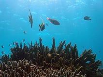 tropiskt livstidshav Fotografering för Bildbyråer
