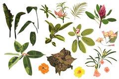 Tropiskt ljust för vektor - gröna växter, djungel lämnar och blommor för att ställa in royaltyfri illustrationer