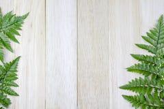 Tropiskt ormbunkeblad på wood brädebakgrund arkivbild