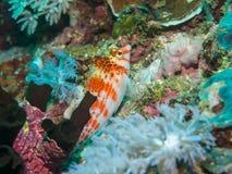 Tropiskt på korallen arkivfoton