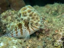 Tropiskt på korallen arkivbilder