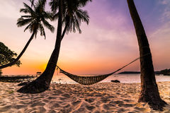 Tropiskt paradis - hängmatta mellan palmträd Royaltyfri Fotografi