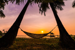 Tropiskt paradis - hängmatta mellan palmträd på sjösidan på Royaltyfria Foton