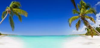 Tropiskt paradis med palmträd Arkivfoto