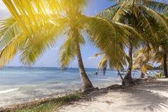 Tropiskt paradis, palmträd på stranden royaltyfri fotografi