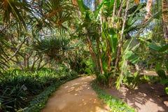 Tropiskt parkera med palmträd, bananträd och annat Royaltyfri Fotografi