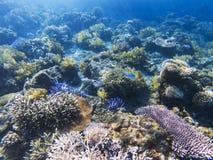 Tropiskt perspektiv för havsbotten Grunt vatten för exotisk ökust Arkivbilder