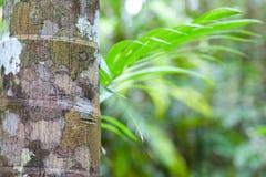tropiskt pristine regn för bakgrundsskoggreen royaltyfri bild