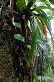 tropiskt regn arkivbild