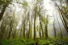 Tropiskt regn Forest Angka Nature Trail, Doi Inthanon nationalpark, Chiang Mai, Thailand arkivbilder