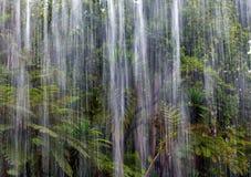Tropiskt regn i djungeln royaltyfri fotografi