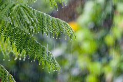 Tropiskt regn i skogen Arkivbild