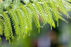 Tropiskt regn i skogen Royaltyfria Bilder