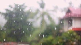 Tropiskt regn tappar att falla på palmbladen i ön Koh Samui, Thailand 1920x1080 arkivfilmer