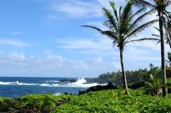 Tropiskt segla utmed kusten Arkivbilder
