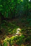 tropiskt skogregn Royaltyfri Foto