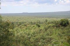 tropiskt skogregn arkivbild