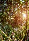 tropiskt skogregn Arkivbilder