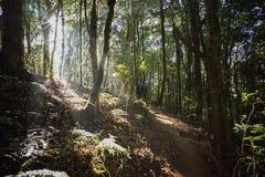 tropiskt skogregn Royaltyfria Foton