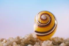 Tropiskt snäckskalhavsskal med havet, stranden och seascape royaltyfri foto