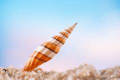 Tropiskt snäckskalhavsskal med havet, stranden och seascape royaltyfria foton
