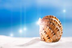 Tropiskt snäckskalhavsskal med havet, stranden och seascape arkivfoton