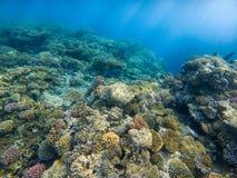 tropiskt solljus för korallfiskrev fotografering för bildbyråer
