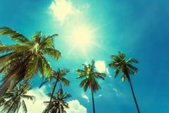 Tropiskt solsken med palmträd och solen på bakgrunden royaltyfri bild
