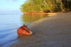 tropiskt strandhavsskal Royaltyfria Foton