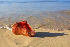 tropiskt strandhavsskal Royaltyfri Fotografi